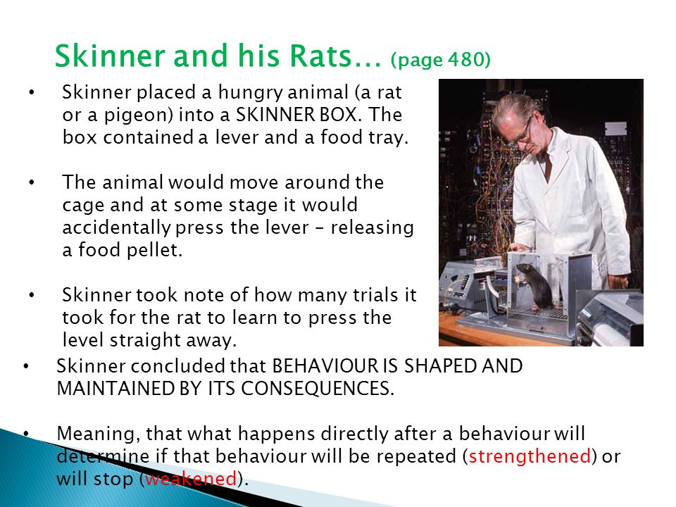 Elements of Operant Conditioning Reinforcement = Any stimulus that strengthens or increases the likelihood of a response that it follows.