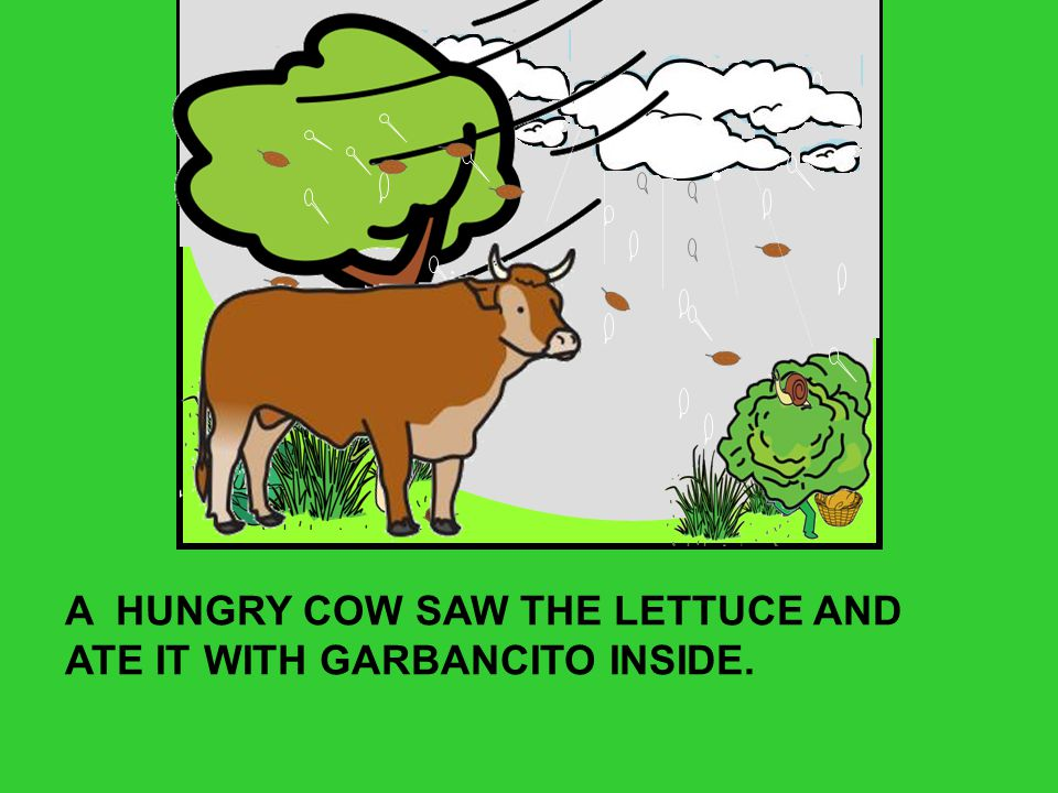 A HUNGRY COW SAW THE LETTUCE AND ATE IT WITH GARBANCITO INSIDE.