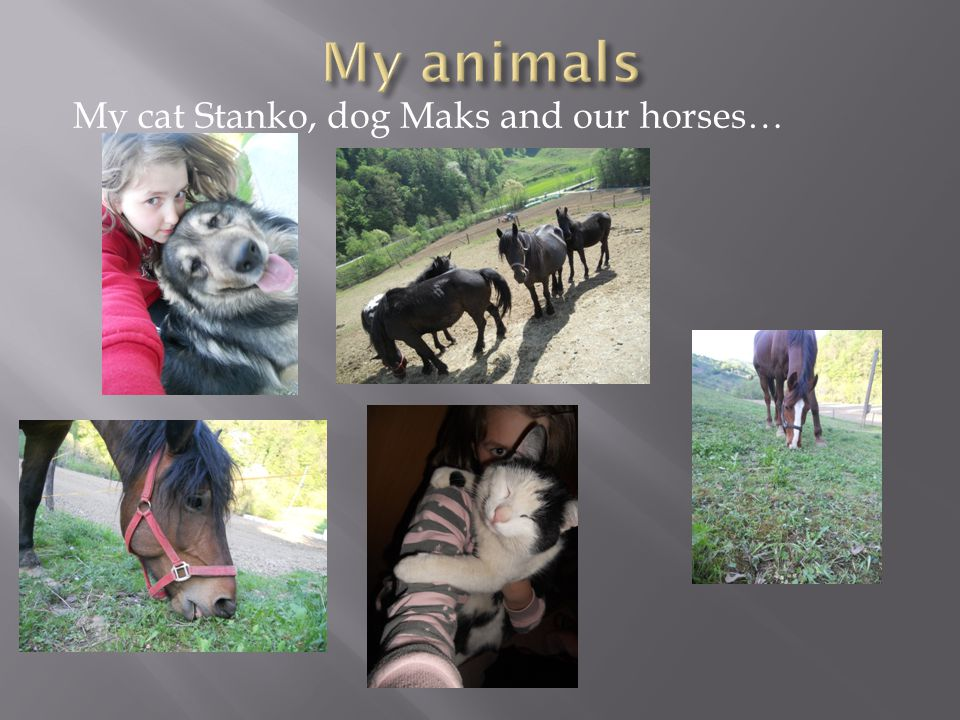 My cat Stanko, dog Maks and our horses…