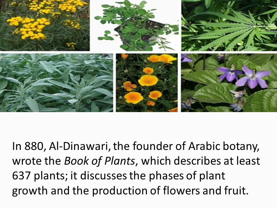 In 880, Al-Dinawari, the founder of Arabic botany, wrote the Book of Plants, which describes at least 637 plants; it discusses the phases of plant gro
