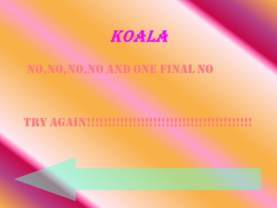 Koala No,No,No,NO and one final NO Try again!!!!!!!!!!!!!!!!!!!!!!!!!!!!!!!!!!!!!!!!