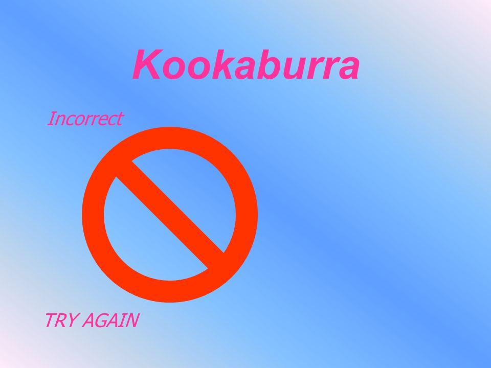 Kookaburra Incorrect TRY AGAIN