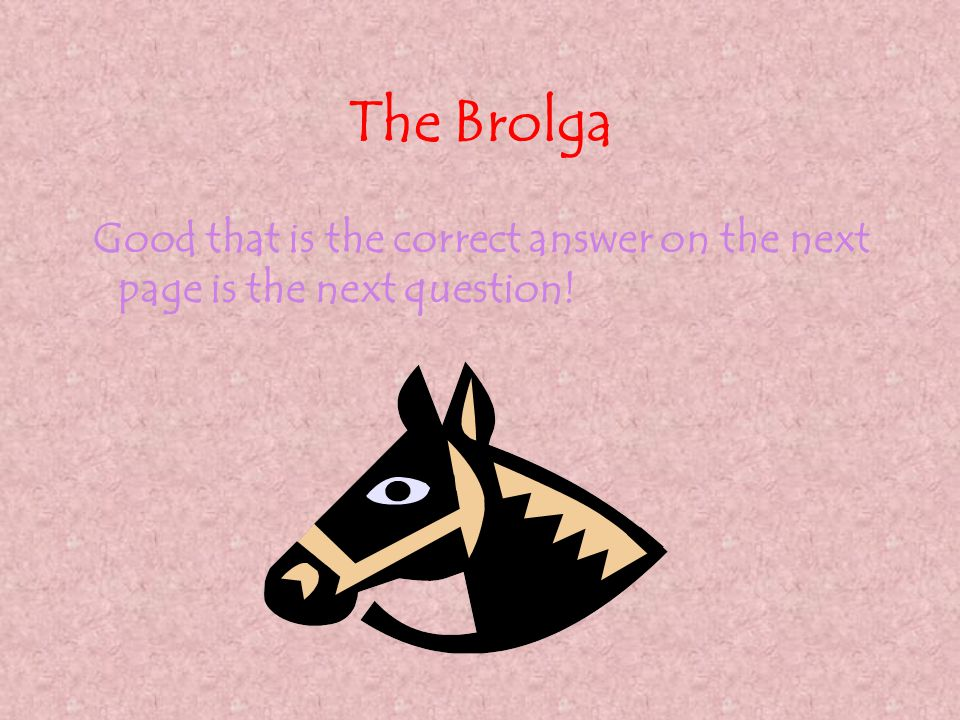 The Brolga Good that is the correct answer on the next page is the next question!