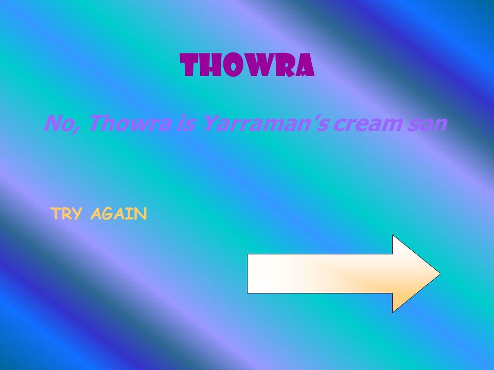 Thowra No, Thowra is Yarraman's cream son TRY AGAIN