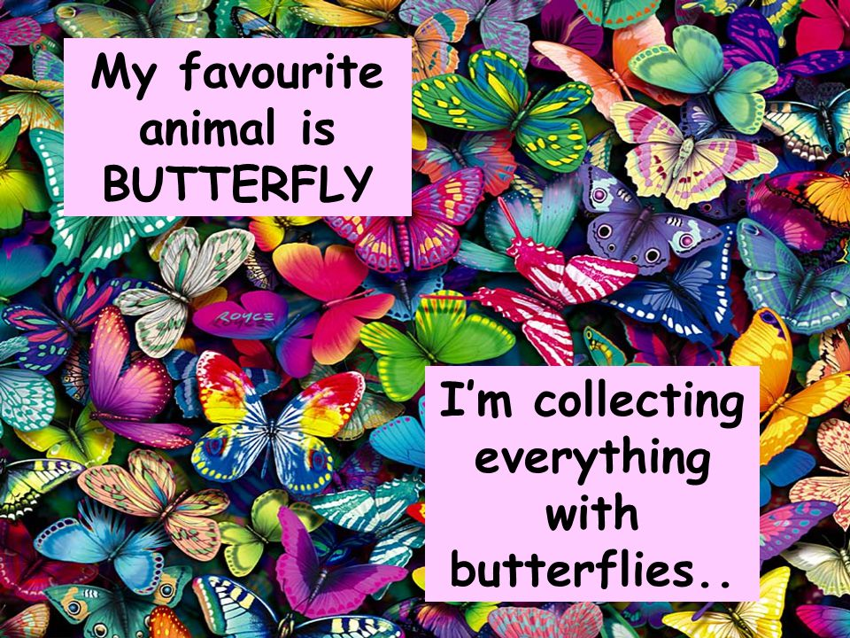 My favourite animal is BUTTERFLY I'm collecting everything with butterflies..