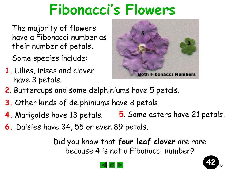 5 Fibonacci's Flowers The majority of flowers have a Fibonacci number as their number of petals.