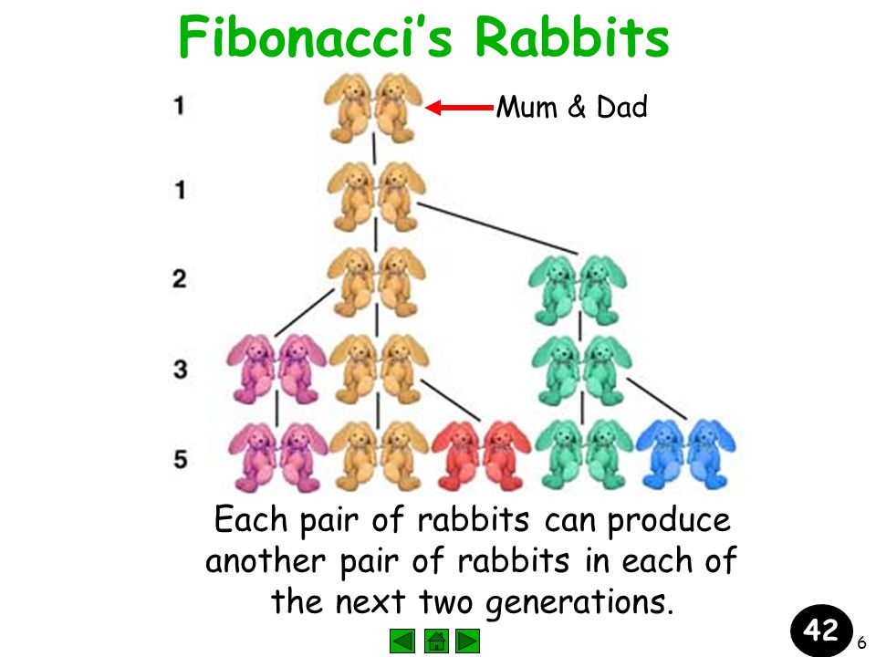 6 Fibonacci's Rabbits Each pair of rabbits can produce another pair of rabbits in each of the next two generations.