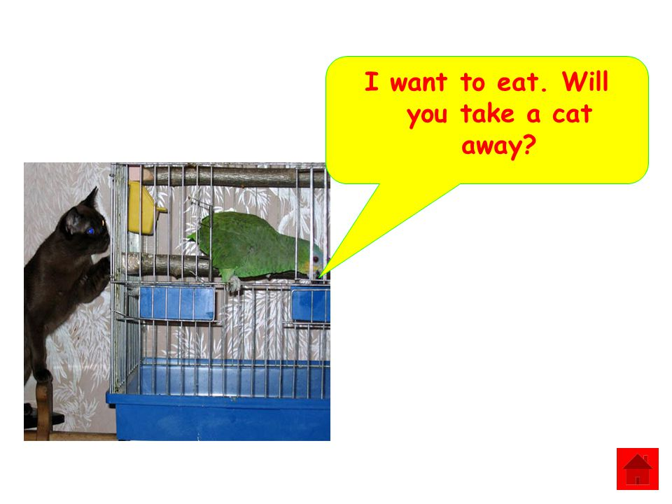 I want to eat. Will you take a cat away?