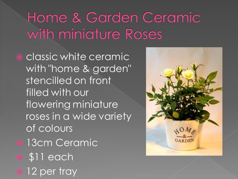  classic white ceramic with home & garden stencilled on front filled with our flowering miniature roses in a wide variety of colours  13cm Ceramic  $11 each  12 per tray