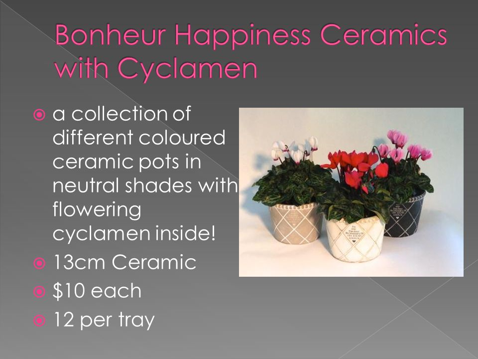  a collection of different coloured ceramic pots in neutral shades with flowering cyclamen inside.