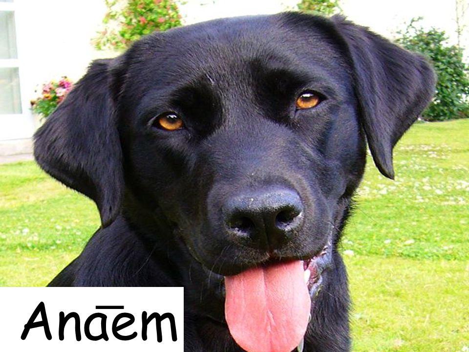 Anaem
