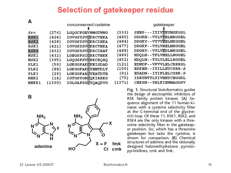 25. Lecture WS 2006/07Bioinformatics III18 Selection of gatekeeper residue