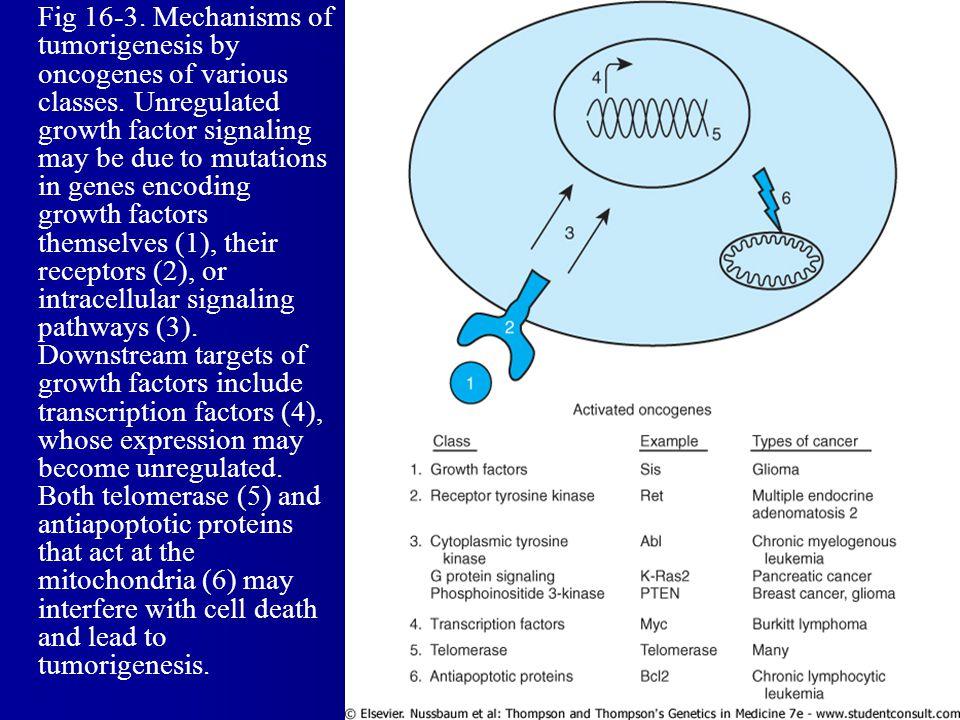 Fig 16-3.Mechanisms of tumorigenesis by oncogenes of various classes.
