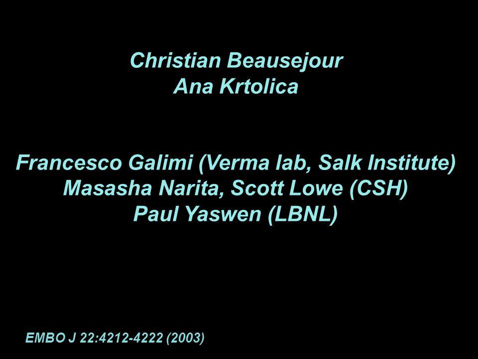 Christian Beausejour Ana Krtolica Francesco Galimi (Verma lab, Salk Institute) Masasha Narita, Scott Lowe (CSH) Paul Yaswen (LBNL) EMBO J 22:4212-4222 (2003)