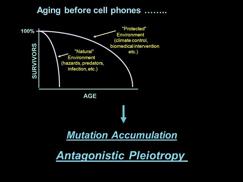 Senescent Fibroblasts Stimulate Tumorigenesis of Premalignant Epithelial Cells In Vivo Days 4080120 Tumor size (mm 3 x 10) 100 0 0 200 100 0 200 SCp2 cells alone + Presenescent Fibroblasts + Senescent Fibroblasts