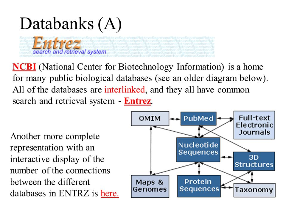 Databanks (A) NCBINCBI (National Center for Biotechnology Information) is a home for many public biological databases (see an older diagram below).