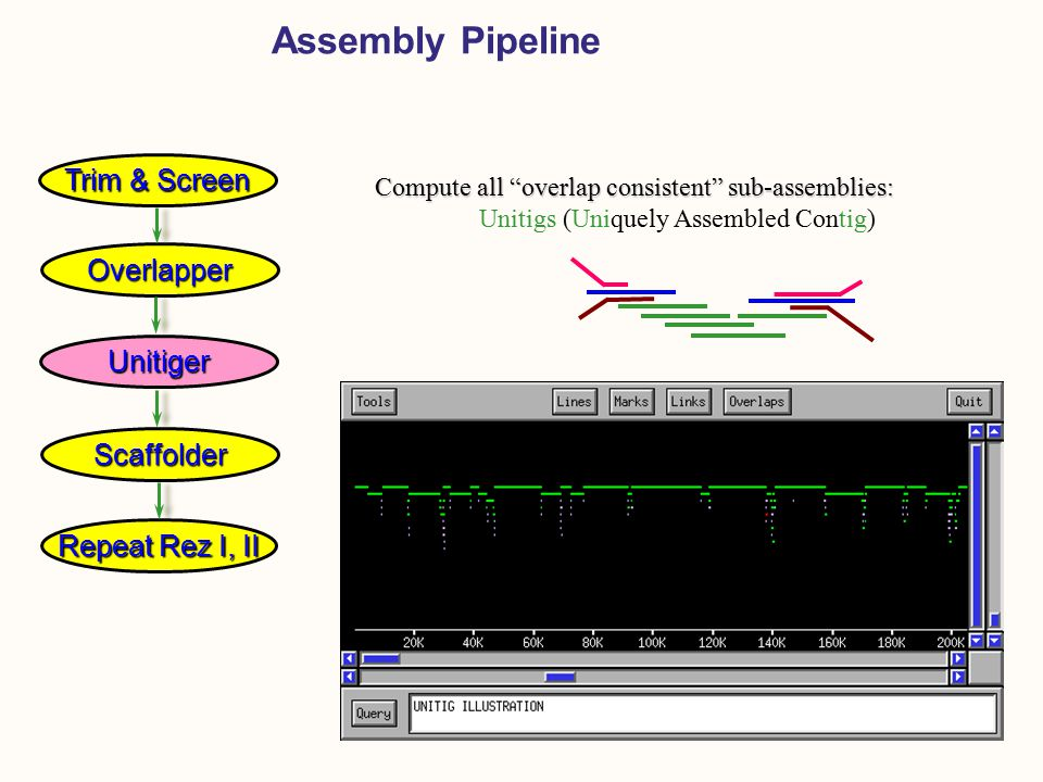 Repeat Rez I, II Assembly Pipeline Compute all overlap consistent sub-assemblies: Compute all overlap consistent sub-assemblies: Unitigs (Uniquely Assembled Contig) Overlapper Unitiger Scaffolder Trim & Screen
