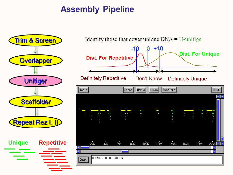 Assembly Pipeline Identify those that cover unique DNA = Identify those that cover unique DNA = U-unitigs-10 +10 0 Definitely Unique Definitely Repetitive Don't Know Dist.