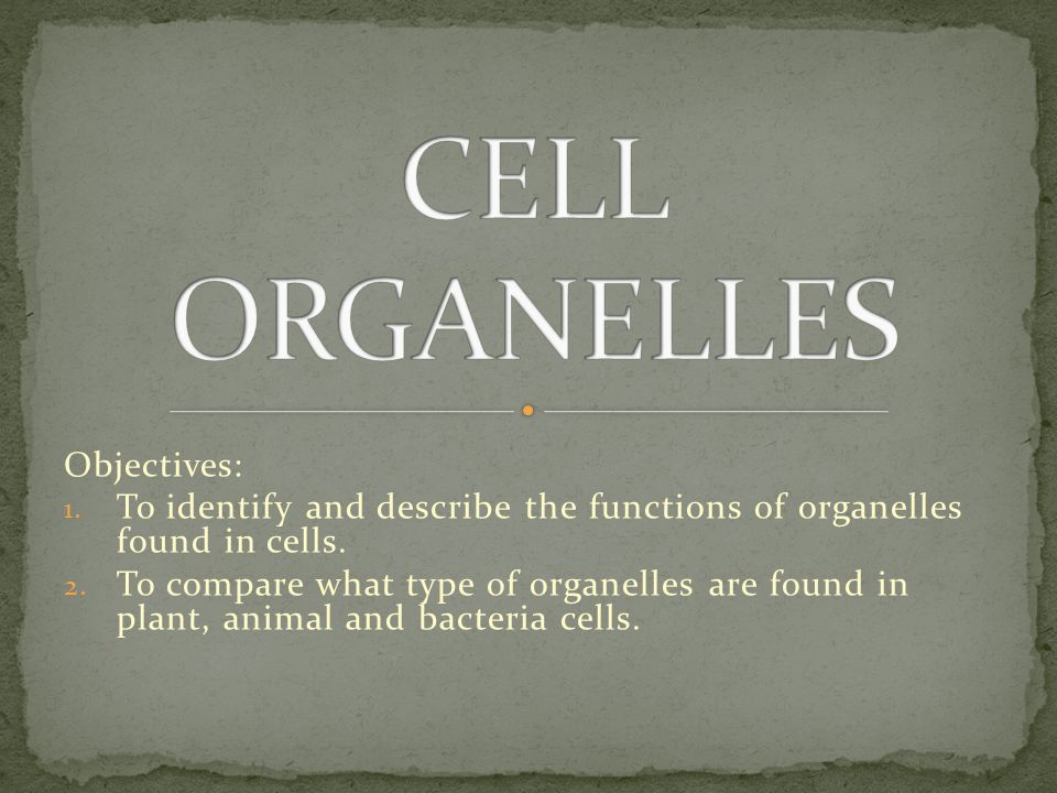 Objectives: 1.To identify and describe the functions of organelles found in cells.