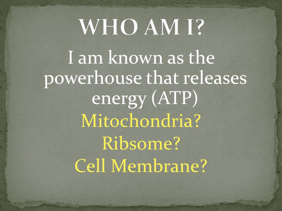 I am known as the powerhouse that releases energy (ATP) Mitochondria? Ribsome? Cell Membrane?