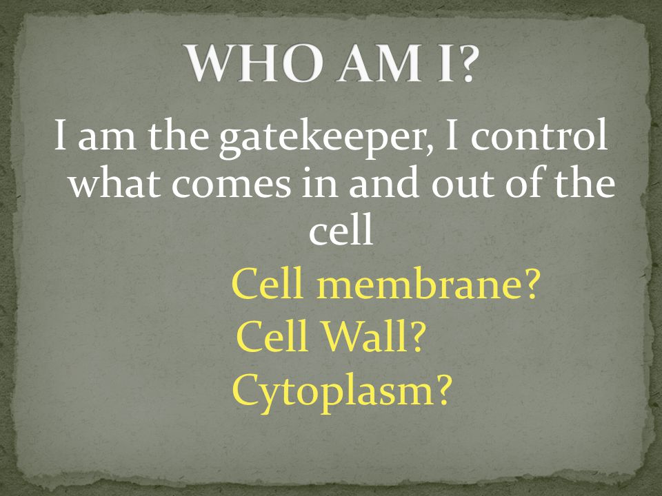 I am the gatekeeper, I control what comes in and out of the cell Cell membrane.