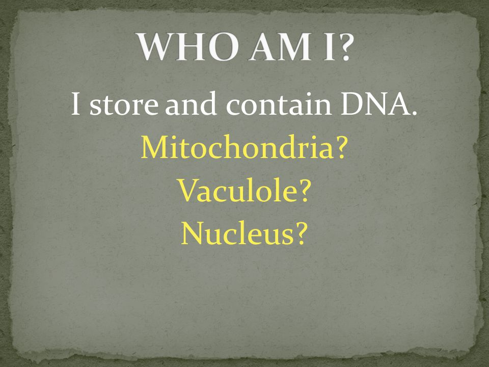 I store and contain DNA. Mitochondria? Vaculole? Nucleus?