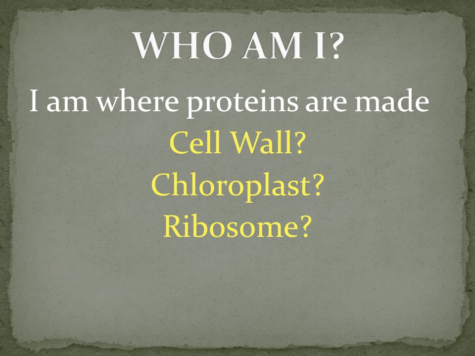 I am where proteins are made Cell Wall? Chloroplast? Ribosome?