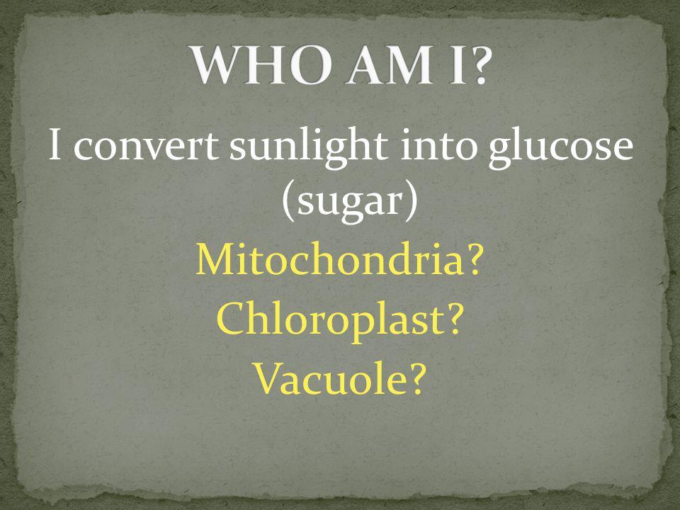 I convert sunlight into glucose (sugar) Mitochondria? Chloroplast? Vacuole?