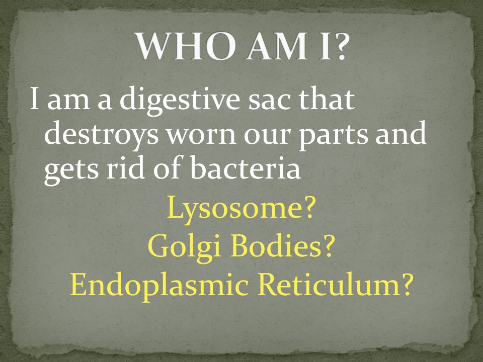 I am a digestive sac that destroys worn our parts and gets rid of bacteria Lysosome.