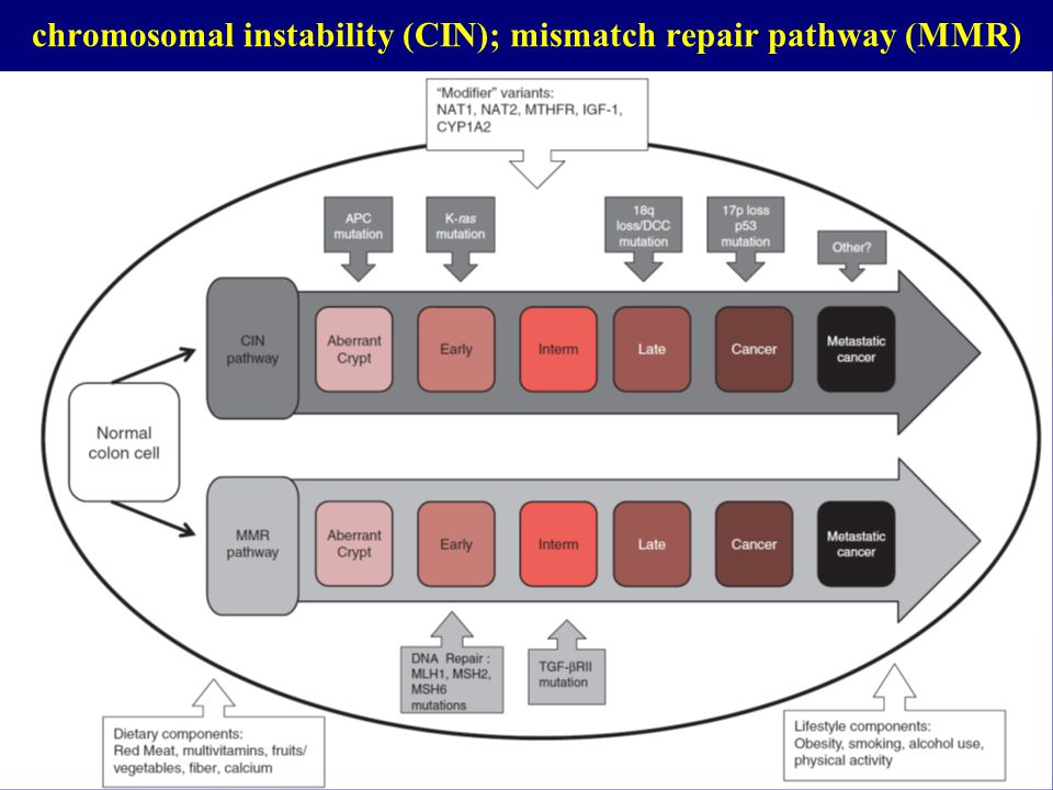 chromosomal instability (CIN); mismatch repair pathway (MMR)