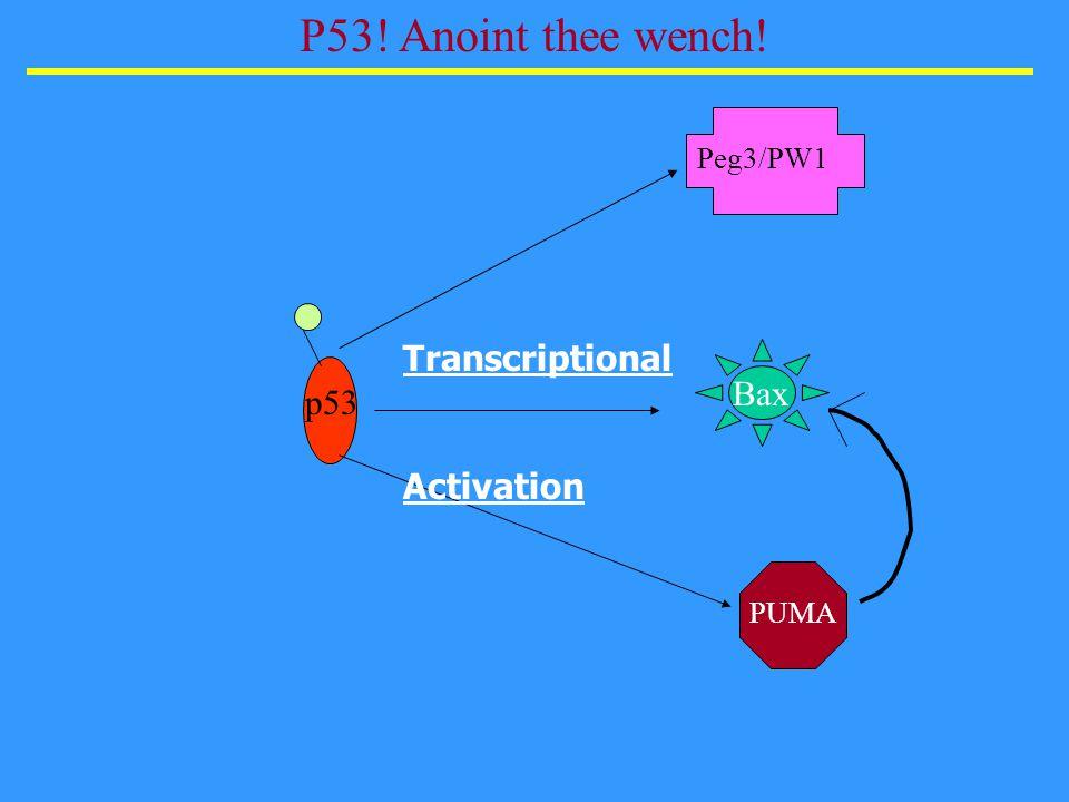 Wang, Guo, Ouyang, Li, Cardo, Kurimasa, Chen, Fuks, Ling, & Li, Cell Biology, 2000 DNA PKcs mediates apoptosis but not cytostasis via p53