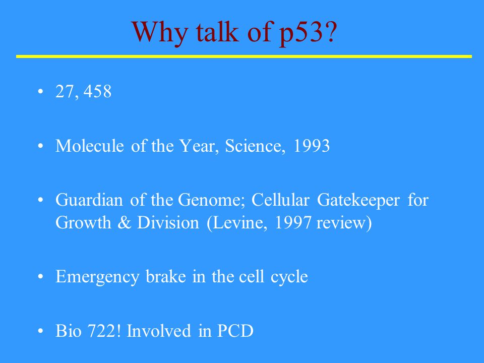 What is p53.