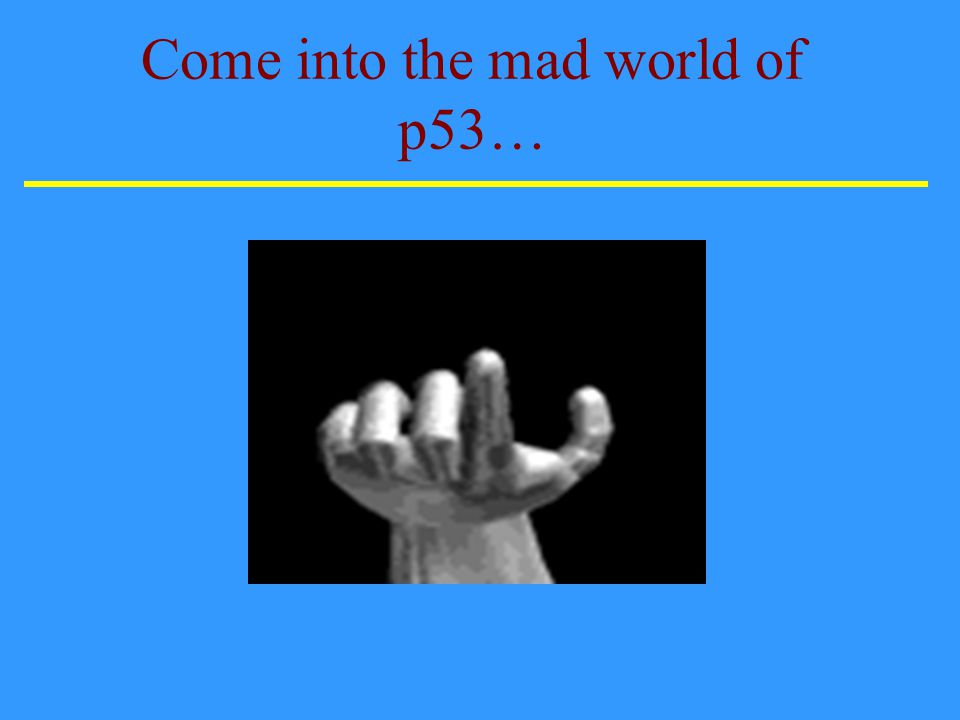 Come into the mad world of p53…