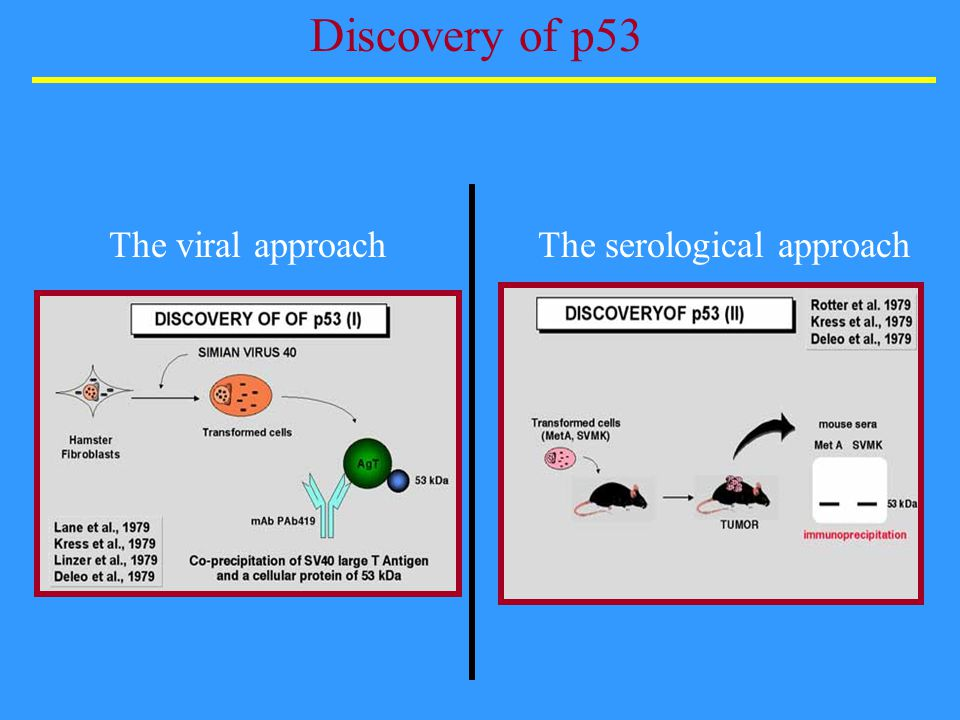 Discovery of p53 The viral approachThe serological approach