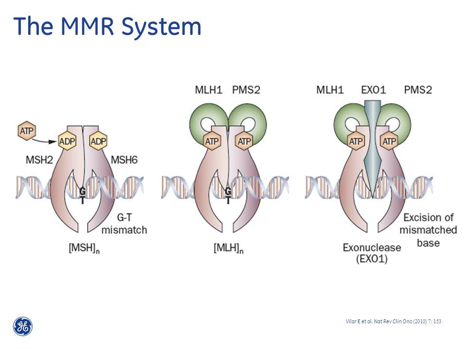 The MMR System Vilar E et al. Nat Rev Clin Onc (2010) 7: 153