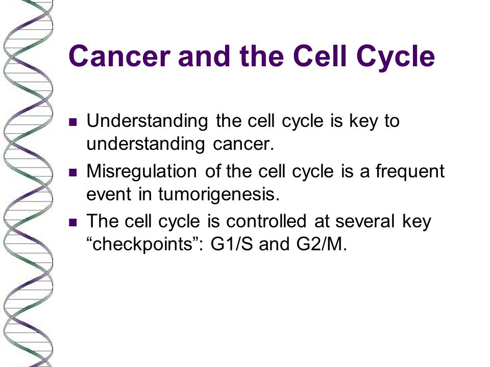 Cancer and the Cell Cycle n Understanding the cell cycle is key to understanding cancer. n Misregulation of the cell cycle is a frequent event in tumo