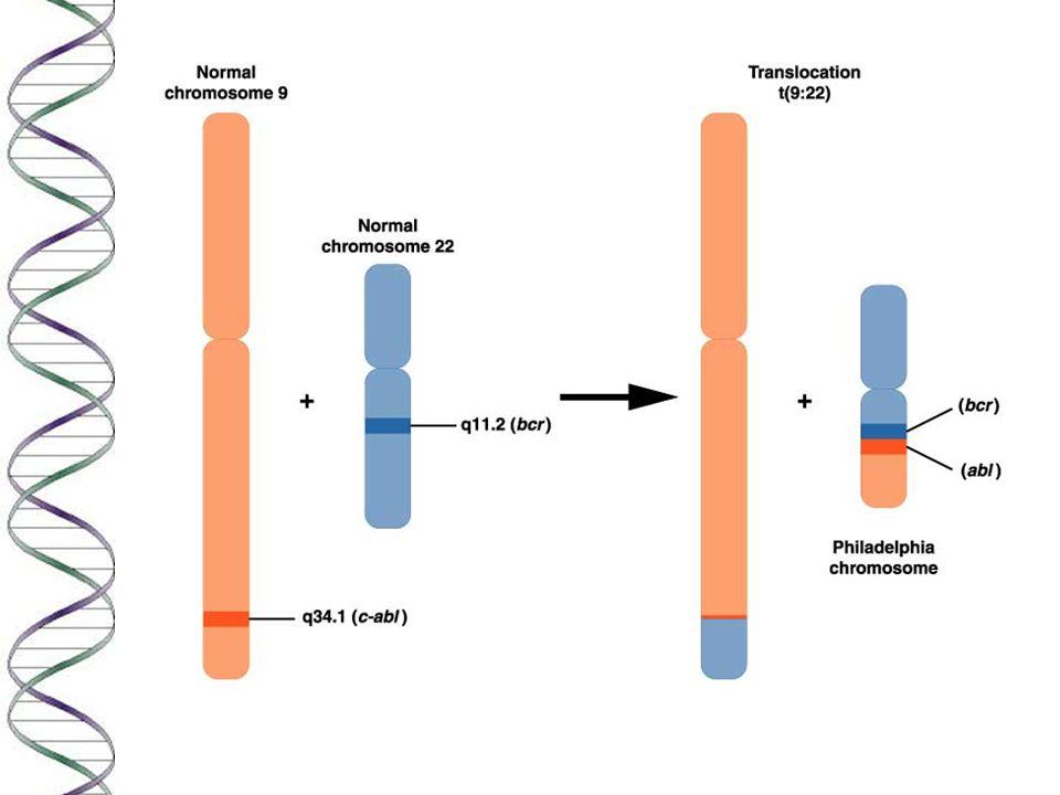 Gatekeeper genes n The gatekeeper gene monitor cell proliferation and death.