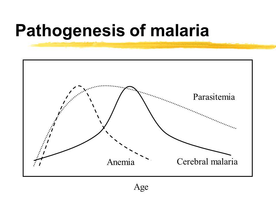 Pathogenesis of malaria Parasitemia Cerebral malaria Anemia Age