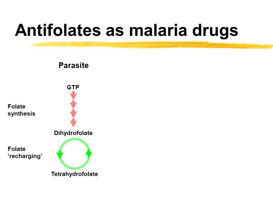 Antifolates as malaria drugs GTP Dihydrofolate Tetrahydrofolate Folate synthesis Folate 'recharging' Parasite