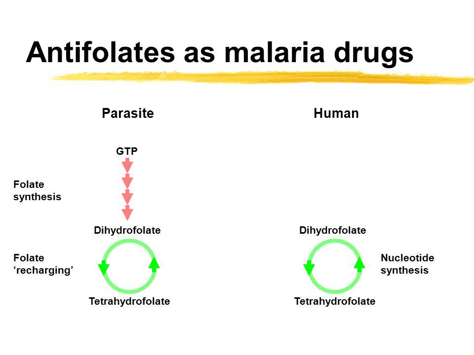 Antifolates as malaria drugs Dihydrofolate Tetrahydrofolate Nucleotide synthesis GTP Dihydrofolate Tetrahydrofolate Folate synthesis Folate 'recharging' ParasiteHuman