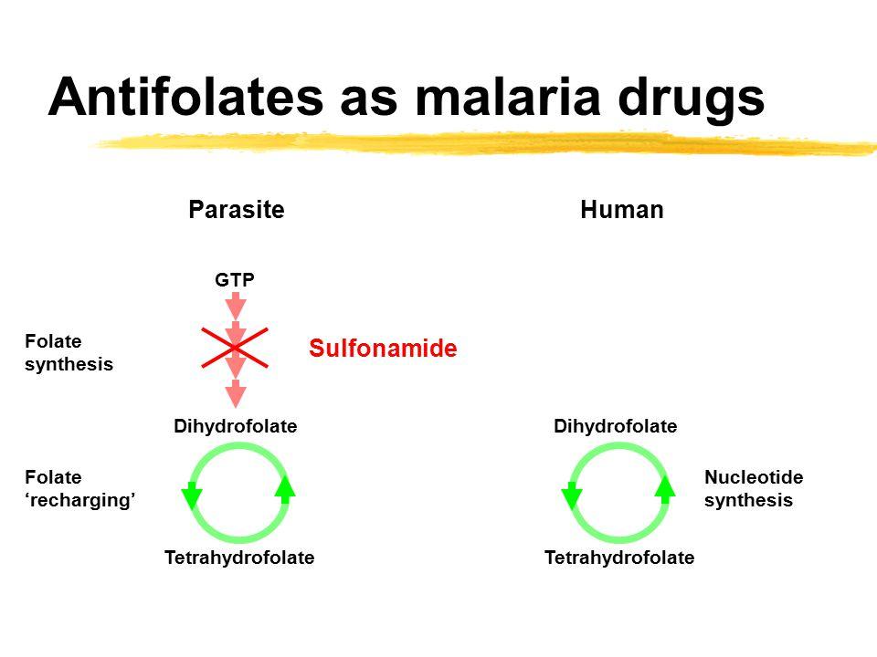 Antifolates as malaria drugs Dihydrofolate Tetrahydrofolate Nucleotide synthesis GTP Dihydrofolate Tetrahydrofolate Folate synthesis Folate 'recharging' ParasiteHuman Sulfonamide