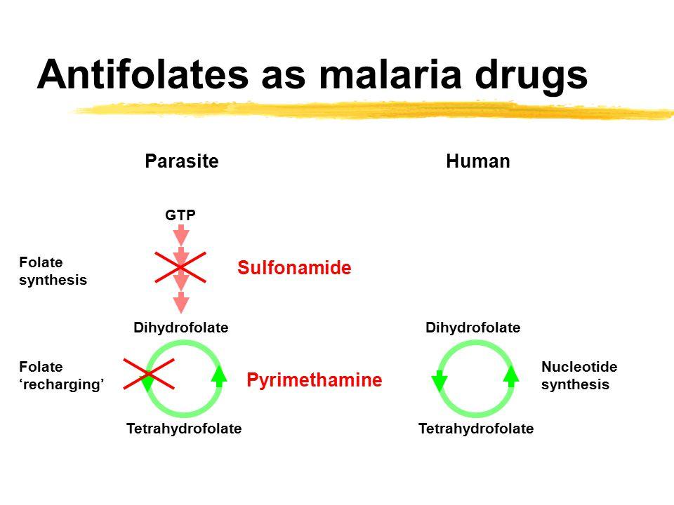 Antifolates as malaria drugs Dihydrofolate Tetrahydrofolate Nucleotide synthesis Human GTP Dihydrofolate Tetrahydrofolate Folate synthesis Folate 'recharging' Parasite Sulfonamide Pyrimethamine