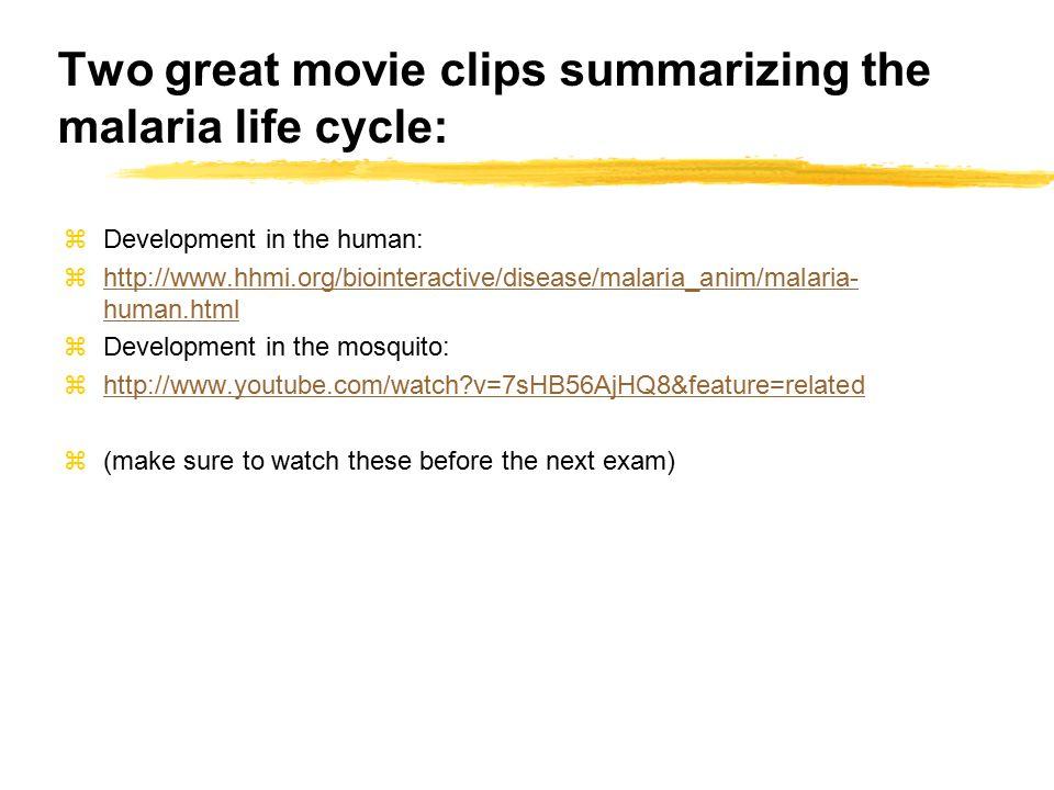 Two great movie clips summarizing the malaria life cycle: zDevelopment in the human: zhttp://www.hhmi.org/biointeractive/disease/malaria_anim/malaria-