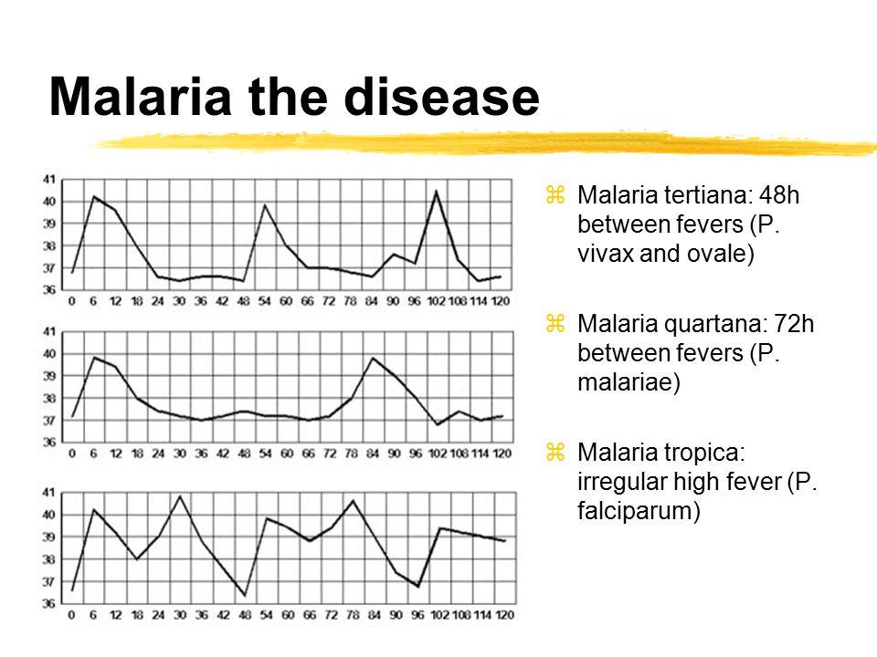 zMalaria tertiana: 48h between fevers (P.