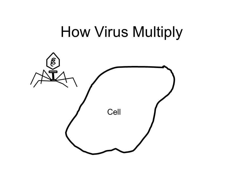 How Virus Multiply Cell