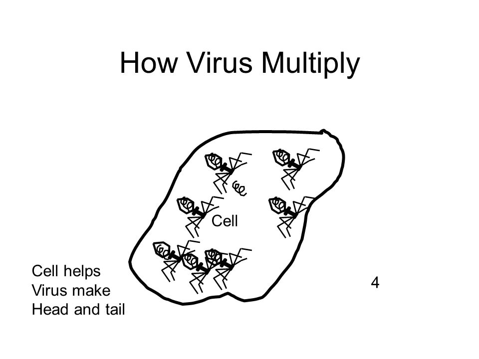 How Virus Multiply Cell Cell helps Virus make Head and tail 4