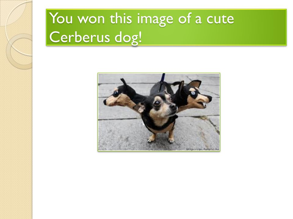 You won this image of a cute Cerberus dog!