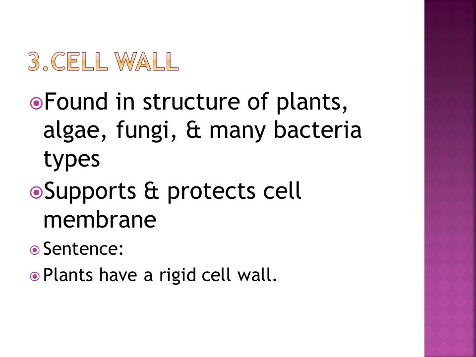  Found in structure of plants, algae, fungi, & many bacteria types  Supports & protects cell membrane  Sentence:  Plants have a rigid cell wall.