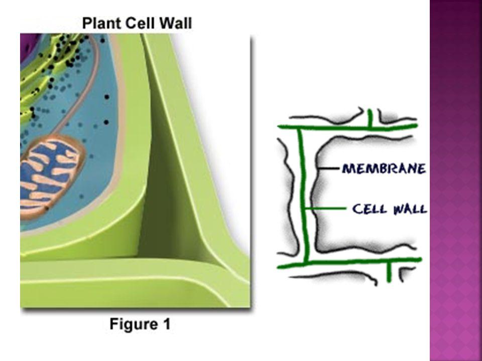 Process plants, algae, and many bacteria use to make food