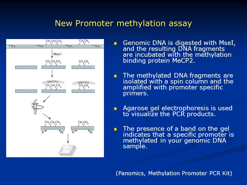 New Promoter methylation assay (Panomics, Methylation Promoter PCR Kit) Genomic DNA is digested with MseI, and the resulting DNA fragments are incubat